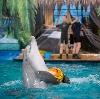 Дельфинарии, океанариумы в Куровском