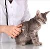 Ветеринарные клиники в Куровском